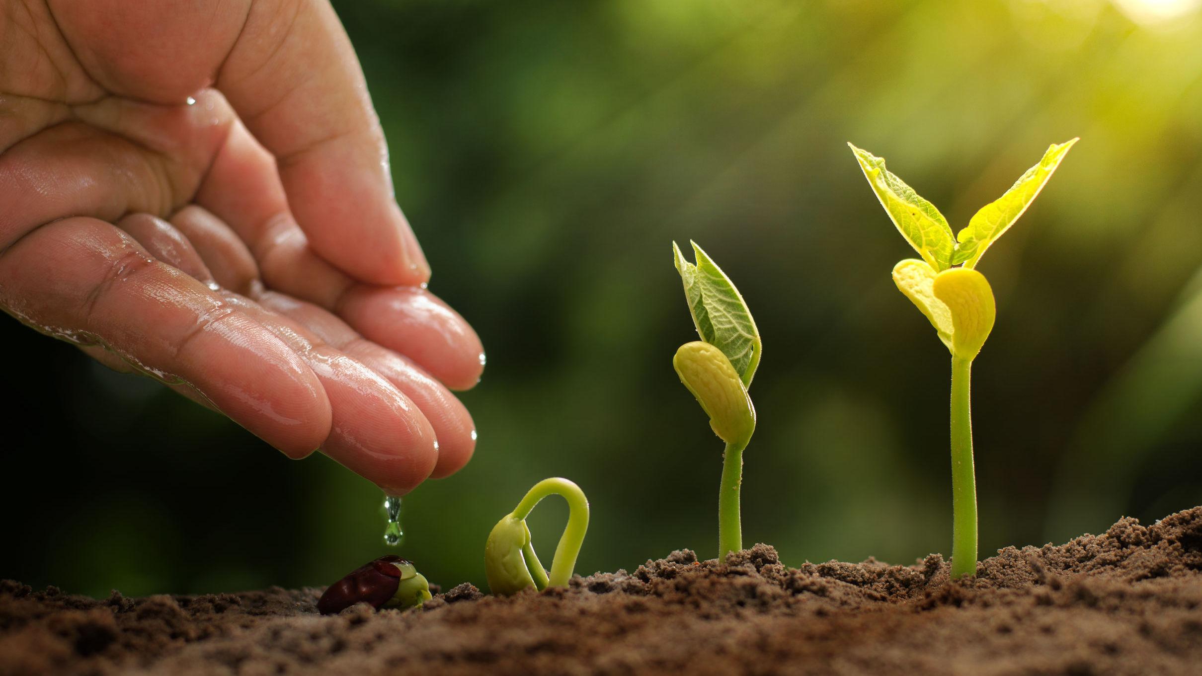 Duurzame groei